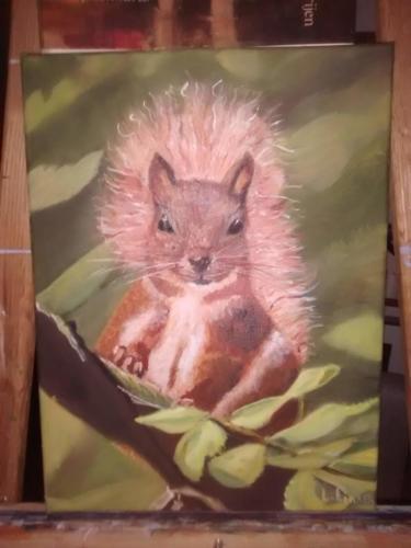 Eekhoorn / Klik voor een vergroting